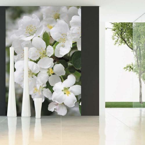 Фотообои Novita, N202, Яблоневый цвет, 200х270 см